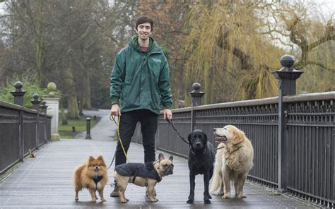 A dog walker could benefit your pet's health