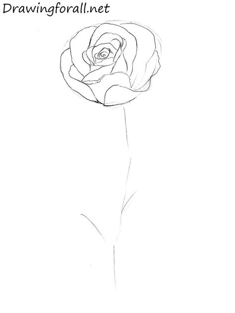 How to Draw a Rose Step by Step   Drawingforall