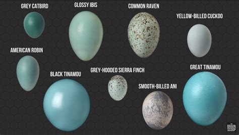 The Field Museum's amazing egg collection | The Kid Should