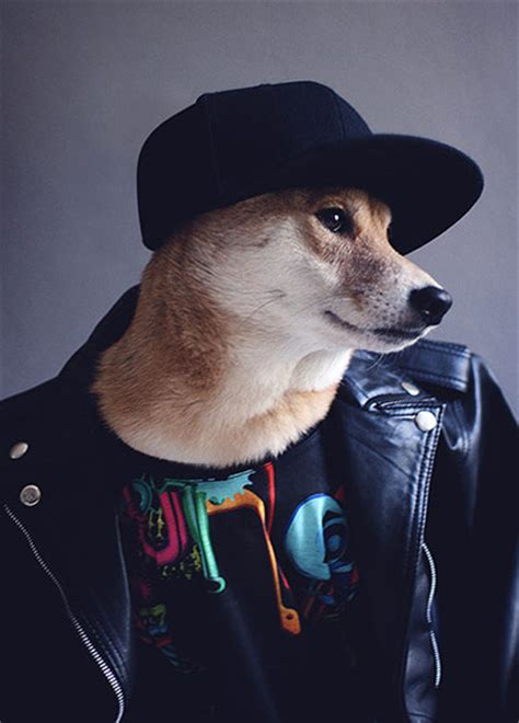 Menswear Dog's best looks – in pictures   Fashion   The