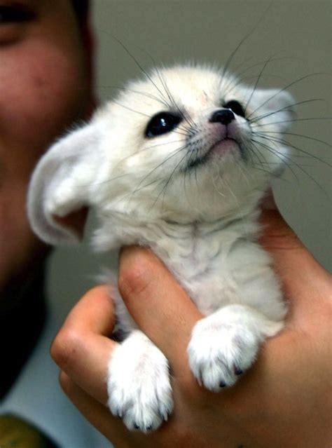 15 Super Cute Hand-Sized Baby Animals - Part 1