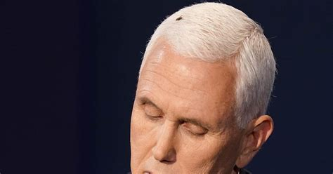 What's the buzz about at the debate? The fly on Pence's head