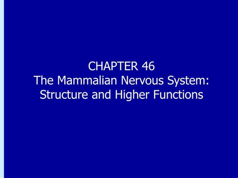 PPT - CHAPTER 46 The Mammalian Nervous System: Structure