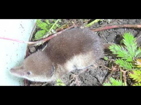 Small Mammal Populations in the Arboretum and Nature Park
