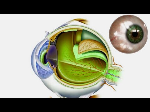 Images of eyes of patients with limbal stem cell