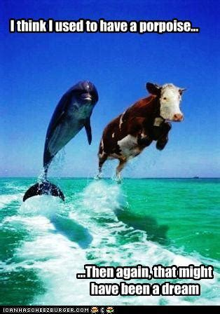 I think I used to have a porpoise